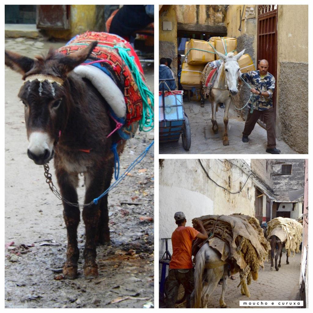 Burro y mulas - Fez