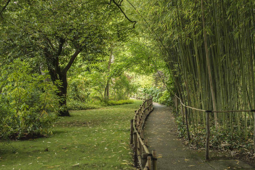 Giverny - Jardín Japonés Claude Monet
